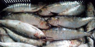 Dosar penal pentru transportul peștelui fără documente legale